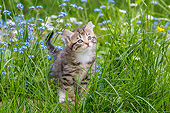 CAT 03 KH0660 01