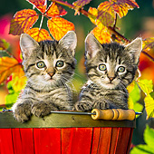 CAT 03 KH0665 01