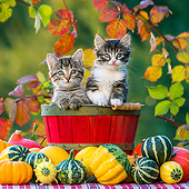 CAT 03 KH0667 01