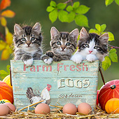 CAT 03 KH0670 01
