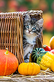 CAT 03 KH0674 01