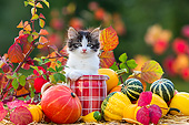 CAT 03 KH0676 01
