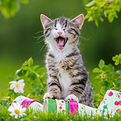 CAT 03 KH0686 01