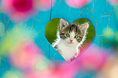 CAT 03 KH0687 01