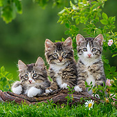 CAT 03 KH0691 01