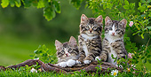 CAT 03 KH0692 01