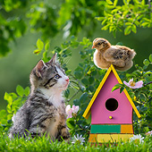 CAT 03 KH0693 01