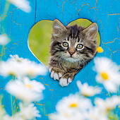 CAT 03 KH0702 01