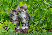 CAT 03 KH0703 01