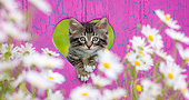 CAT 03 KH0705 01