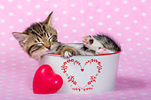 CAT 03 KH0729 01