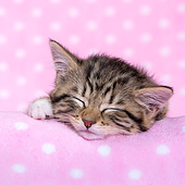 CAT 03 KH0730 01