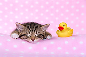 CAT 03 KH0731 01