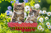 CAT 03 KH0744 01