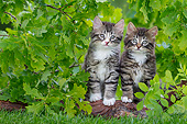 CAT 03 KH0754 01