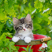 CAT 03 KH0755 01