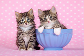CAT 03 KH0756 01