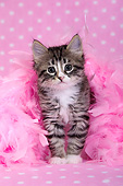 CAT 03 KH0763 01