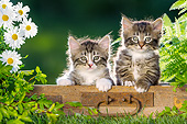 CAT 03 KH0766 01