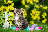 CAT 03 KH0773 01