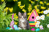 CAT 03 KH0774 01