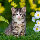 CAT 03 KH0776 01