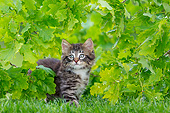 CAT 03 KH0779 01