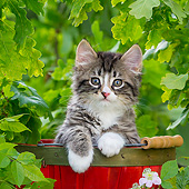 CAT 03 KH0783 01