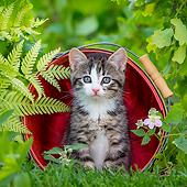 CAT 03 KH0784 01