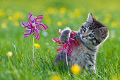 CAT 03 KH0785 01