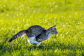 CAT 03 KH0786 01