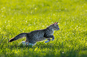 CAT 03 KH0787 01