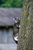 CAT 03 KH0789 01