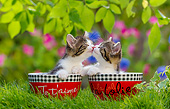CAT 03 KH0798 01