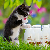 CAT 03 KH0801 01
