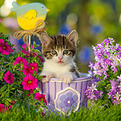 CAT 03 KH0803 01