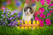 CAT 03 KH0805 01