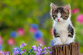 CAT 03 KH0807 01