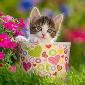 CAT 03 KH0809 01