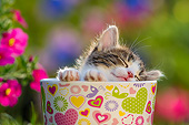 CAT 03 KH0810 01
