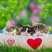 CAT 03 KH0815 01