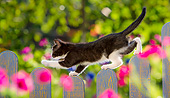 CAT 03 KH0823 01