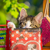 CAT 03 KH0834 01