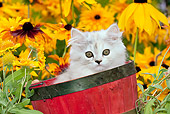 CAT 03 LS0003 01
