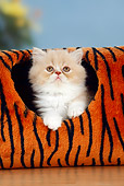 CAT 03 PE0001 01