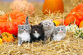CAT 03 PE0004 01