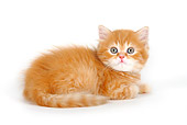 CAT 03 PE0006 01