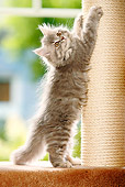 CAT 03 PE0011 01