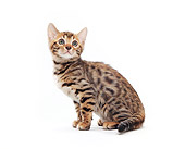CAT 03 PE0017 01