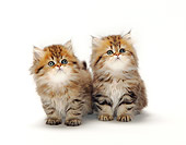 CAT 03 PE0023 01